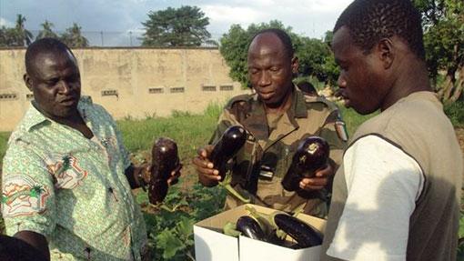 Photo d'un bénévole PRSF, un directeur d'Administration pénitentiaire et un détenu dans un jardin maraîcher en Côte d'Ivoire - PRisonniers Sans Frontières